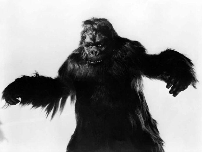 gorilla 1939