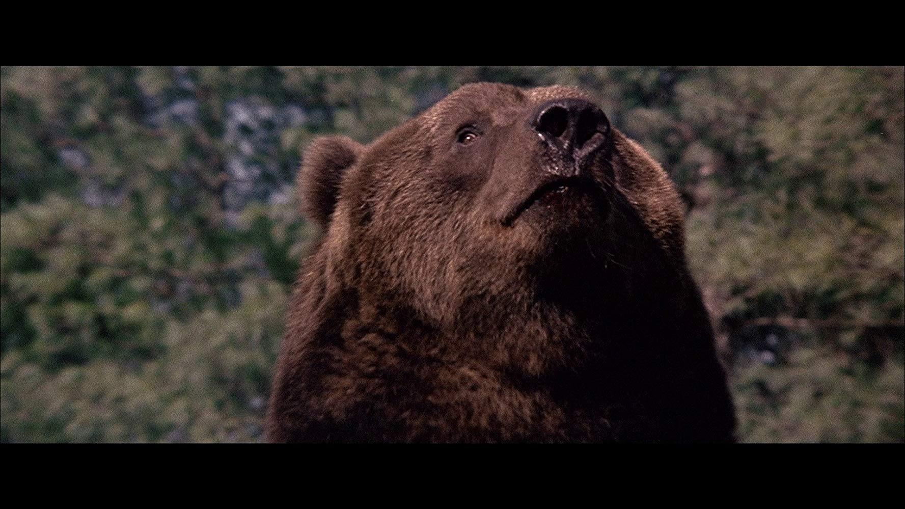 grizzly bear movie